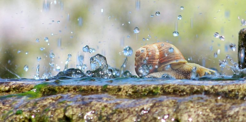 A picture of a snail being attacked by droplets of rain